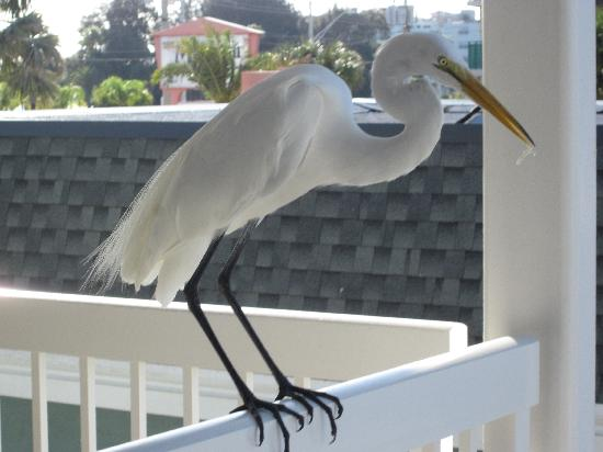Mariner Beach Club: A visitor that we had right outside our door.  He wasn't afraid of us at all and let us approach