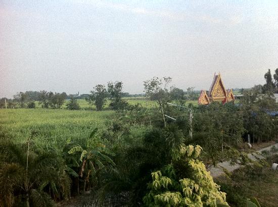Family Homestay Little Heaven: Sugarcane Plantation