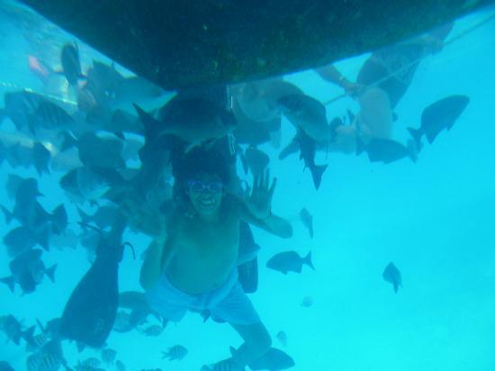 Sol Caribe San Andres: Encuentro con los peces