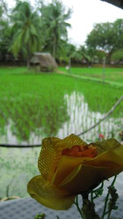 Pia's The Padi : Looking out to the paddy field