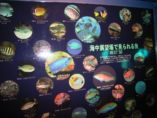 Kushimoto Marine Park Undersea Tower : 展望塔で見られる魚