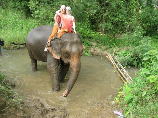 Jumbo Elephant Camp Day Tour