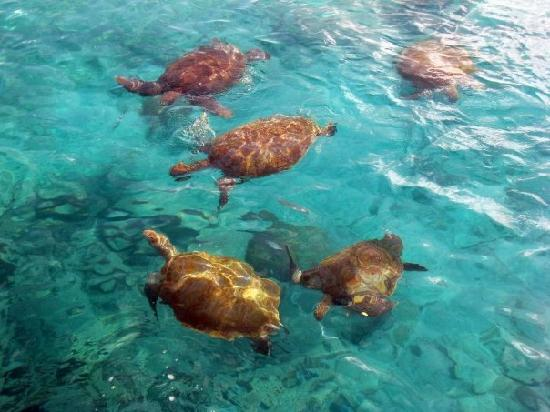 Silver Point Hotel: Grab some (free) fish guts and swim with turtles!