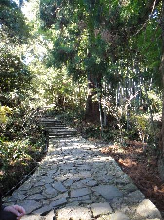 Kumano Kodo: 杉並木に囲まれた熊野古道