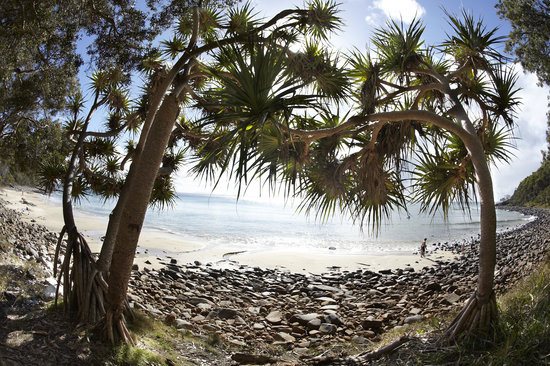 Ringtail Creek, Australia: Noosa National Park jsut 15 mins away