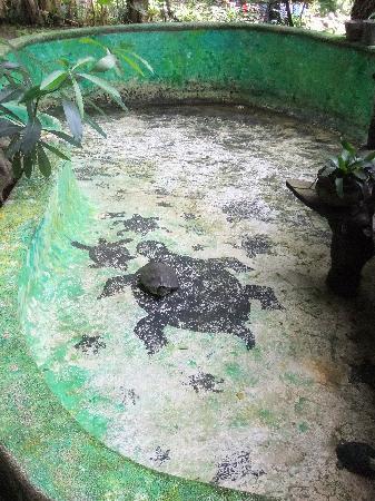 Enigmata Treehouse Ecolodge: Turtles!
