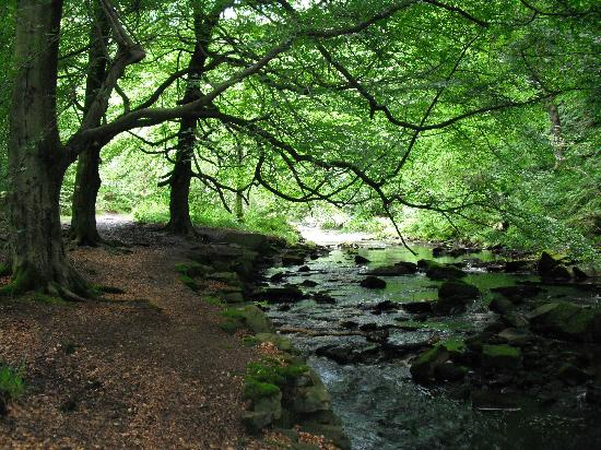 Hardcastle Crags: Hebden water