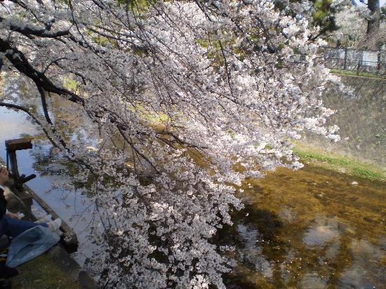 Shukugawa Park: 川辺に~*