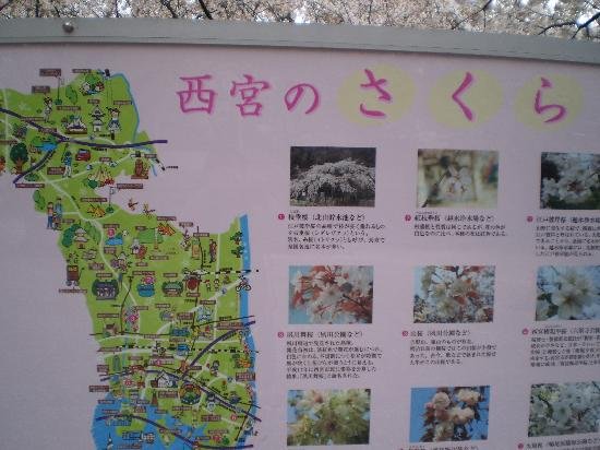 Shukugawa Park: 看板