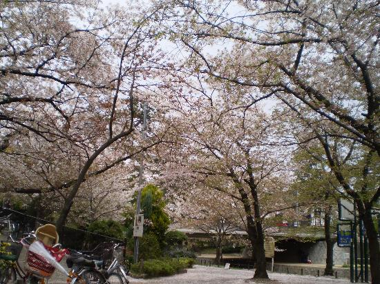 Shukugawa Park: 綺麗ですよ