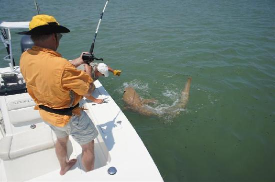 Tarpoons Private Charters : Shark