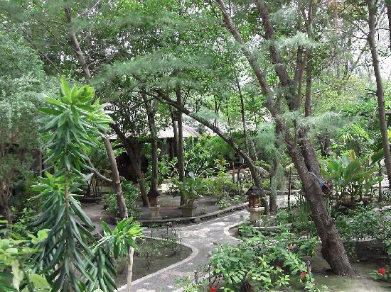 Alam Gili: Vista general del jardín