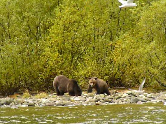 Spirit Bear Lodge: Black Bears