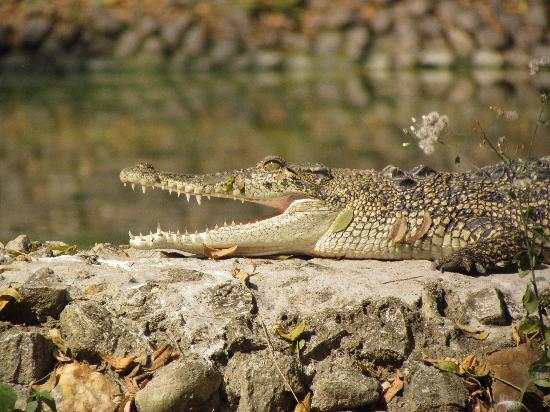 Alipore Zoological Gardens in KOLKATA - Must See ...
