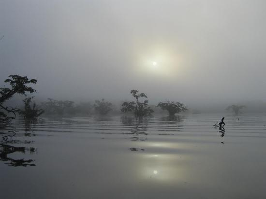 Cuyabeno Lodge: Lagoon at Sunrise