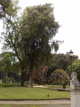 Borghese Gardens And Gallery Tours January
