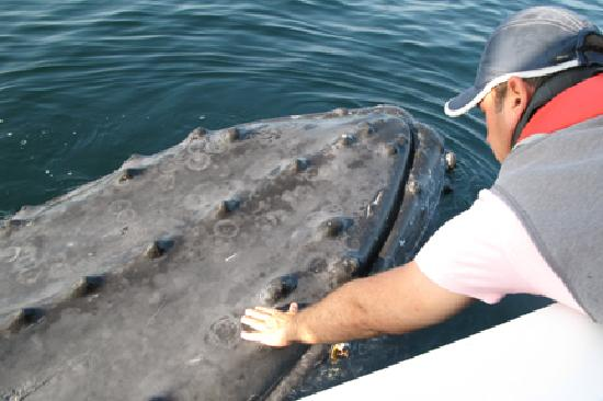 Ocean Friendly Whale Watching Tours: Saying hello to an old friend...