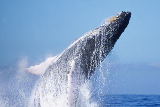 Ocean Friendly Whale Watching Tours: In the splash zone!