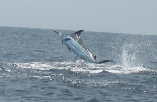 Pisces Sportfishing (Cabo San Lucas, Mexico): Top Tips ...