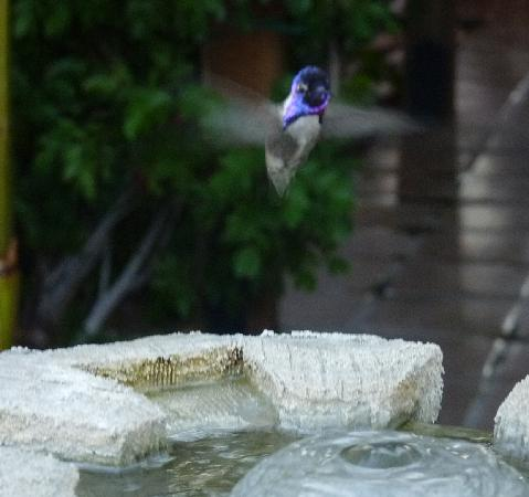 Hotel California: Visiting Hummingbird