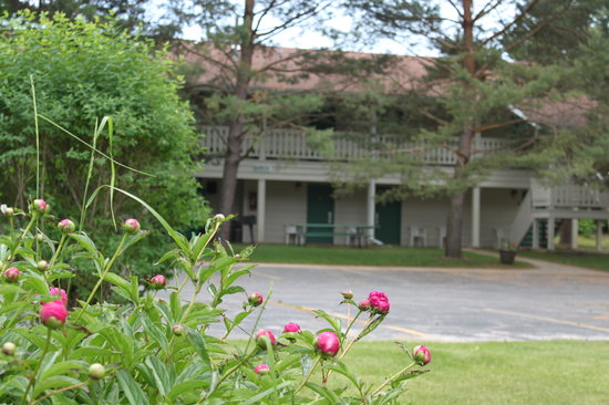 blooming Flowers at parkwood Lodge