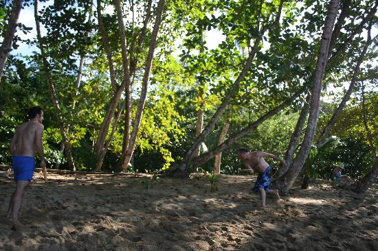 Englishman's Bay : Trees behind us on the sandy beach