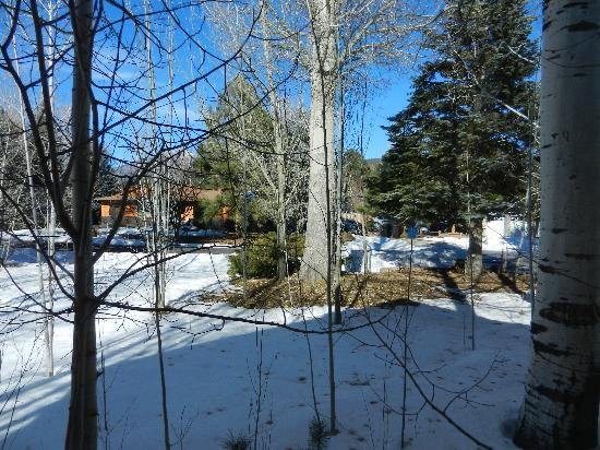 Conifer House Inn: view from the window from inside the Ponderosa room