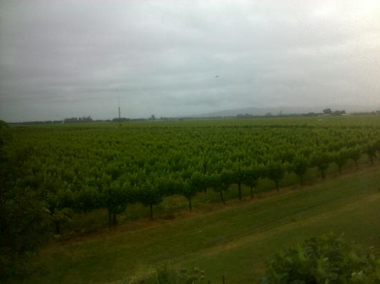 Korohi Vineyard B&B: View from the 2nd floor window - beautiful, even if a rainy day!