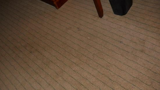 Holiday Inn Express Hotel & Suites Urbana-Champaign (U of I Area): carpet stains