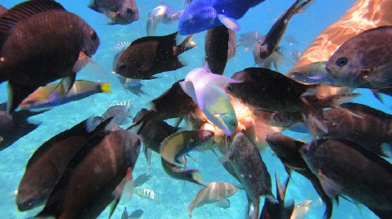 Pele Island: Fish