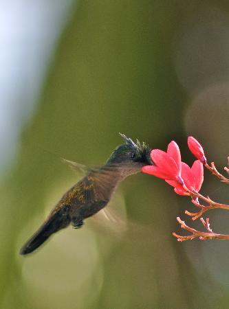 جالي باي ريزورت آند سبا - أنتيجوا: Wildlife