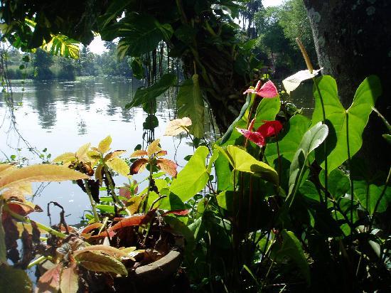Malayalam Lake Resort Homestay: Easy on the Eye.