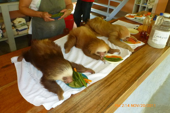 Monteverde Sloth Santuary