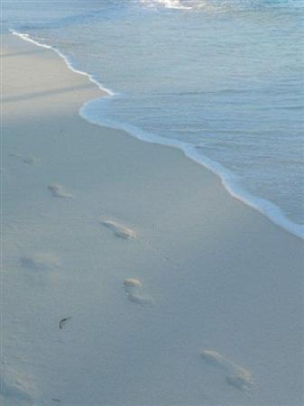 Beaches Turks & Caicos Resort Villages & Spa: THE BEACH