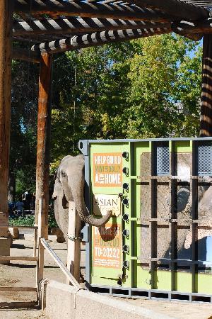 Denver Zoo: Under construction