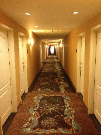 Hampton Inn by Hilton Toronto Airport Corporate Centre: 7th floor hallway