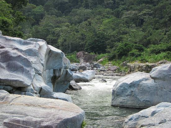 Jungle River Lodge: the river