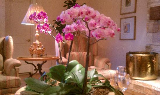 Tickle Pink Inn: lareira, livros, novos amigos, vinho... esta sala é um sonho!