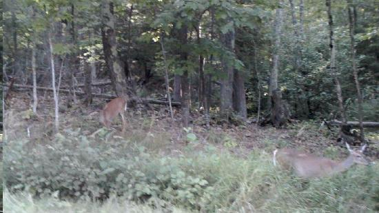 Apostle Islands, WI: Deer on the Island