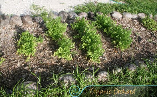 Casa BlatHa: jardín orgánico/organic garden
