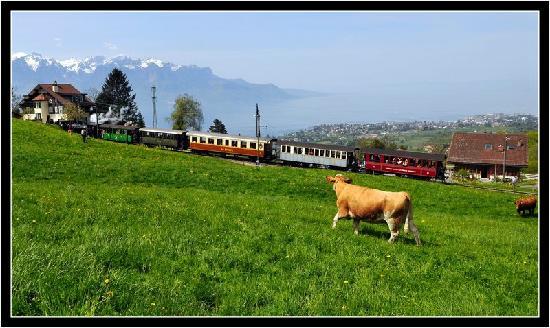 Railway Museum Blonay-Chamby : La vache et le train