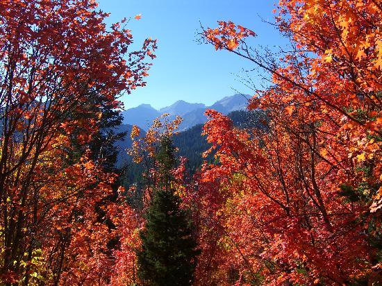 Fall Colors Alpine Loop