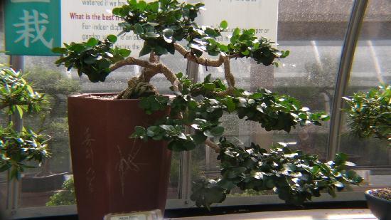 Eden Park : Krohn Conservatory bonsai room