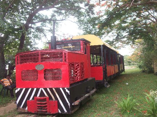Coral Coast Railway: The train