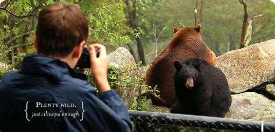 Linville, Carolina do Norte: Guests stand eye-to-eye with bears in natural habitats.