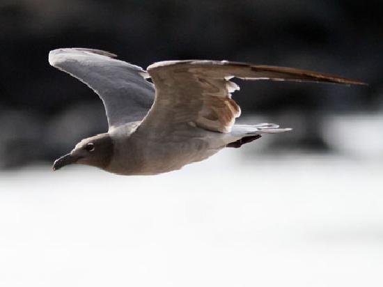 Hostal Rincon de George: lava gull