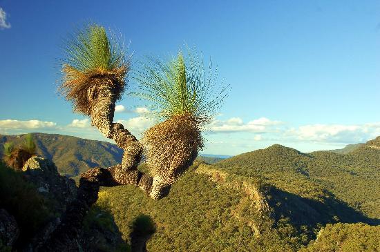 Mt Kaputar National Park: Atop Yulludunida looking north