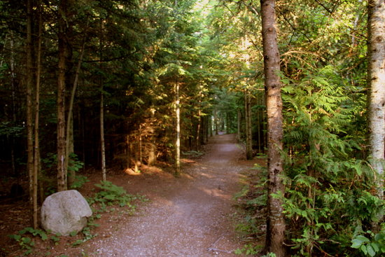 Mackinaw Mill Creek Campground: Lots of nice trails and roads for walking, biking
