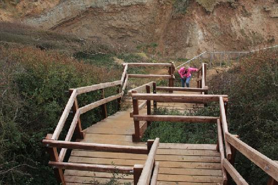 Isle of Wight Fossil Hunts - Island Gems: Steps to Beach
