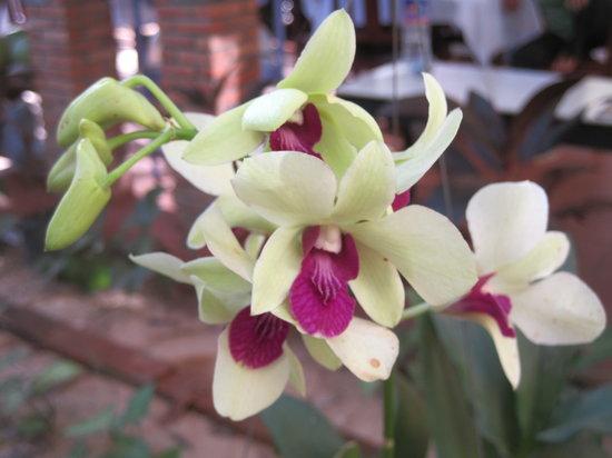 ดรีม วิลล่า: Beautiful orchids